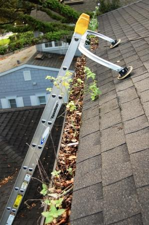 Bay Area Gutter Cleaning